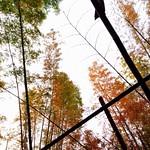 數竿蒼翠擬龍形,峭拔須教此地生。無限野花開不得,半山寒色與春爭。 Poetry Bamboo Bamboo Forest Colorful at 甲仙 Jiashian thumbnail