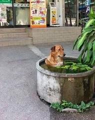 Dog takes a bath (donnagreenword) Tags: dog bath takes funnypicture funnydogs