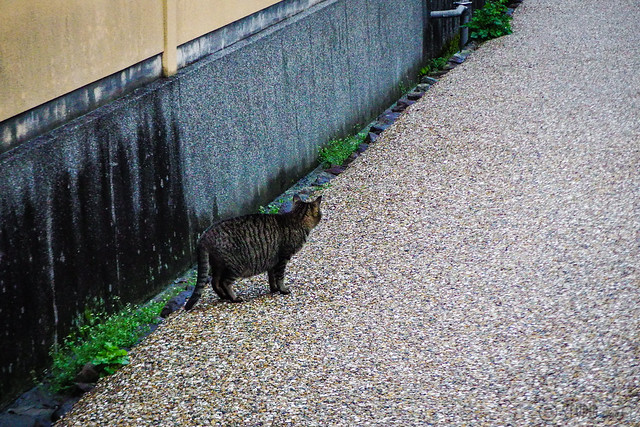 Today's Cat@2015-03-10