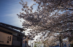 Kansai 2015 (kelvintkn) Tags: city travel urban plant flower colour nature japan digital daylight asia sony 28mm evil osaka f2 fullframe lightroom autofocus wideanglelens primelens mirrorless dfine2 sharpenerpro3 emount colourefexpro4 sonyilce7r sonyfe28mmf2
