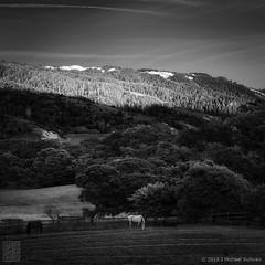 """Horse Farm at Sunset, Bolinas CA (24""""x24) (JMichaelSullivan) Tags: california bw monochrome square 100v mono nikon 10f bolinas badge 600v dxo 200v 500v d800 700v 2015 300v 5f mjsfoto1956 400v 2485mmvr piccure"""