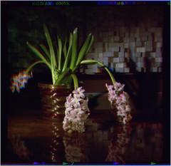 Pinhole Trichrome (Dave Woodhead 71) Tags: 120 coffee asda kodak trix pinhole epson rgb graflex speedgraphic trichrome caffenol standdevelopment v750 wratten f225 04mm trichromy trichromie