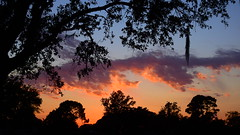 April 2nd Sunset (Jim Mullhaupt) Tags: pink blue sunset red wallpaper sky orange sun color tree weather silhouette yellow clouds landscape evening nikon flickr sundown florida dusk palm exotic p900 tropical coolpix bradenton mullhaupt cloudsstormssunsetssunrises jimmullhaupt