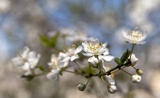 Simply Spring mk1