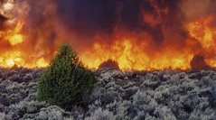 sagebrush fire