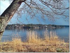 Värmdö (HJsfoto) Tags: lake nature landscape musictomyeyes värmdö potofgold almostanything