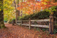 Mt Wilson colour 1 (Ian Moore Photo) Tags: blue autumn mountains leaves nikon colours mt wilson d800