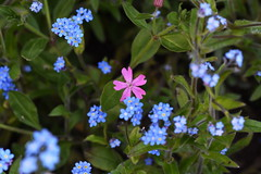 DSC_1140 (PeaTJay) Tags: flowers plants macro nature gardens fauna outdoors reading flora sigma micro closeups berkshire lowerearley nikond750