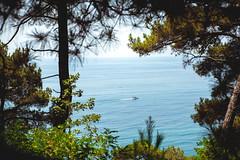 beautiful view of wild recreation (MatthewDuff) Tags: sea wild summer vacation cliff holiday beach water pine forest swimming freshair cotedazur clean heat traveling tanning shotonthestreet