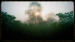 Forest mist (Rupa Razi) Tags: mist forest photopainting