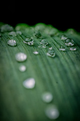 Water Droplets (blergh.) Tags: plant macro green water droplets nikon 105mm d600