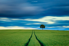 [In Explore 27/06/2016] The lonely tree (Tekila63) Tags: longexposure tree clouds landscape nuages paysage arbre nd1000
