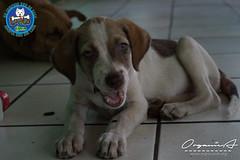 DSC08182 (OrgNicAmb) Tags: dogs perros nicaragua refugio mascotas masaya peluditos recataditos casahogarlucito orgnicamb