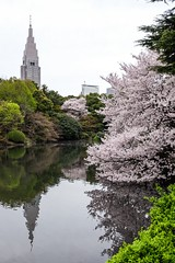 Cherry Blossom VIII (Douguerreotype) Tags: park city pink flowers urban reflection tree water japan buildings garden cherry tokyo pond blossom cherryblossom sakura