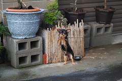 Dog's Pray () Tags: dog dogs olympus panasonic  dg  f12 penf 425mm