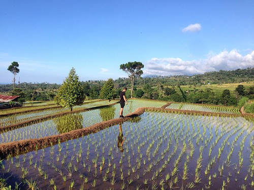 Rice Paddies - Senaru - Lombok