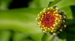 P7129868 (Mark J. Stein) Tags: flower color nature closeup colorful longwoodgardens 2016 photobymarkjstein photobymarkstein