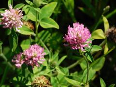 DSCN1531 (mjbarz) Tags: summer nature illinois hike trail westdundee carpentersville 2016 racewaywoods