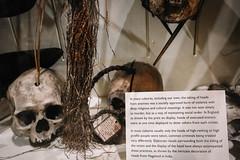QF4C7699 (leslilundgren) Tags: skull bones pittriversmuseum