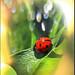 Sonnenberg Gardens & Mansion Historic Park ~ Canandaigua NY ~ Lady Bug