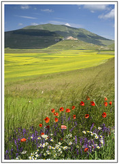 Postcard from Umbria (adam_pierz) Tags: castelluccio italy umbria flowers poppies hill field