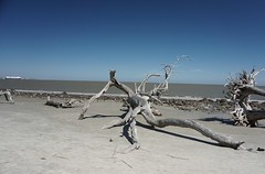 Driftwood Beach 1 (Bo Drinkard) Tags: beach georgia coast cool sony driftwood coastal weathered alpha popular jekyll top500 a6000