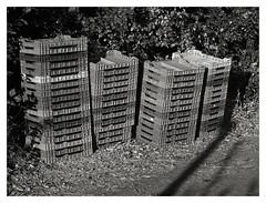 ARNDANOS / San Clemente 04 (ORANGUTANO / Aldo Fontana) Tags: chile blackandwhite bw canon trabajo flickr social bn sanclemente trabajadores blanconegro documental talca g10 regindelmaule arndanos canong10 orangutano aldofontana