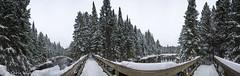 Winter Bridge Panorama (awaketoadream) Tags: park bridge winter panorama snow ontario canada pine river angle wide 360 fir algonquin spruce madawaska provincial