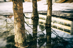 Trees in the Water (Tuomo Lindfors) Tags: trees snow reflection water suomi finland puddle lumi kuopio vesi heijastus puut dfine ltkk niksoftware viveza sharpenerpro theacademytreealley analogefexpro