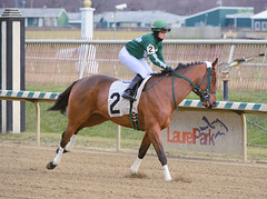 "2015-01-02 (75) r5 Cecily Evans on #2 Nofinancingneeded (JLeeFleenor) Tags: photos photography md laurelpark marylandhorseracing marylandracing jockeys jockey جُوكِي ""赛马骑师"" jinete ""競馬騎手"" dżokej jocheu คนขี่ม้าแข่ง jóquei žokej kilparatsastaja rennreiter fantino ""경마 기수"" жокей jokey người horses thoroughbreds equine equestrian cheval cavalo cavallo cavall caballo pferd paard perd hevonen hest hestur cal kon konj beygir capall ceffyl cuddy yarraman faras alogo soos kuda uma pfeerd koin حصان кон 马 häst άλογο סוס घोड़ा 馬 koń лошадь bay maryland"