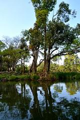 DSC_0140_2 (drs.sarajevo) Tags: india karnataka madikeri kaveririver dubareelephantpark