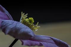 ...Makro (Katz-Ffm) Tags: flower nature germany deutschland hessen blossom frankfurt spike blume makro 90mm blte nahaufnahme nikond5300