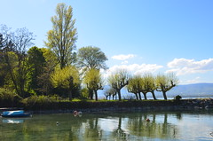 DSC_2093 (tanyagrgas) Tags: trees lake france europe yvoire