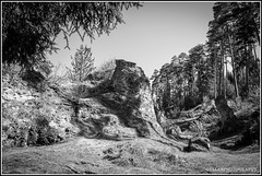 (Fay2603) Tags: trees wild white black monochrome rock landscape rockies blackwhite fuji outdoor frame landschaft bume felsen wildness einfarbig schwarzweis xt1 fotorahmen felsenlandschaft