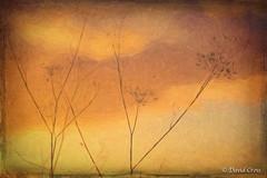 Shiten (HSS) (buffdawgus) Tags: abstract landscape baylandspreserve canon70200mm28l canon5dmarkiii lightroom5 topazsw