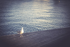 What? (Rubén RG) Tags: barcelona bird water animal 35mm harbor nikon pigeon d3100