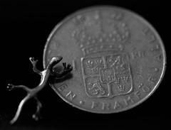 Smaller than a coin / Macro Mondays (camillagarin) Tags: macromondays smallerthanacoin