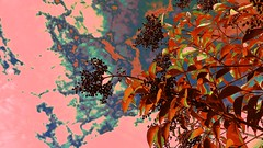 Abstract Flora (maginoz1) Tags: autumn red abstract art canon flora manipulate g3x may2016