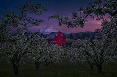 Drawn Together (Ryan_Buchanan) Tags: trees mountain color night oregon barn stars nikon blossom buchanan pear hood exposurescape