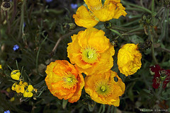 L1008716 (LaBonVampire) Tags: leica flowers nature zeiss carlzeiss zm leicam8 teletessart485 teletessar85