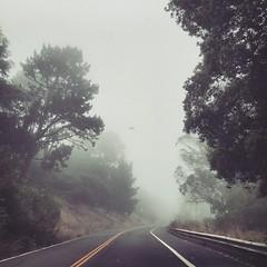 Summer (tedd4u) Tags: sanfrancisco california road trees summer cold tree fog wind cloudy twinpeaks