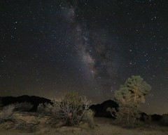 Our Galaxy (kimpossible pics) Tags: trees sky nature night stars landscape outdoors nationalpark skies desert joshuatree galaxy astrophotography nightsky universe bushes californiadesert milkyway joshuatreenationalpark nightskies