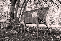 the old chair in the forest (Dale Michelsohn) Tags: wood old trees nature forest canon chair seat monotone g5x dalemichelsohn