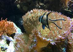 ZooWuppertal_BotanischerGartenRUB 2016_20 (spookybine) Tags: zoo wuppertal animals tiere nature natur underwater unterwasserwelt sea water fish