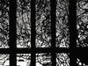 """""""As grades do condomínio são para trazer proteção, mas também, trazem a dúvida: será que é você quem está nessa prisão?"""" (All my day) Tags: black blackorwhite abstrato monocromatico"""