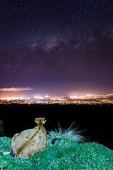 Aux premires loges (LandAndNightscape) Tags: milkyway voielacte 974 canon70d canon vache cow stars toiles ciel sky night nightscape nocturne ville light