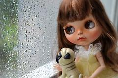 Rainy day (Fenekdolls) Tags: blythe ooak pet felted dog custom doll pug french bulldog portrait