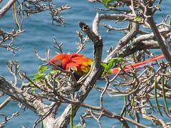 hula hoop sat 045 (Learn, Love, Conserve) Tags: hulahoop saprissa puntaleona feriaverdearanjuez