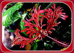 Fleurs Flowers VN 42 Vietnam Zoo Botanical Garden, Tho Cm Vin Si Gn, Jardin Zoologique Botanique, Saigon, TP Ho Chi Minh City Ville, Vuon Hoa, Parc Jardin Floral Botanique Remarquable, Roseraie, Floral Rose Botanical Remarkable Garden Parck (tamycoladelyves) Tags: flower cute floral rose fleurs garden botanical zoo amazing nice fantastic pretty priceless awesome jardin super vietnam delicious stunning botanic extraordinaire charming incredible botanique botanicalgarden saigon hochiminhcity parc rosegarden unforgettable extraordinary magnifique pleasant beautifull delightful unbelievable remarkable floralpark jardinbotanique jardindesplantes parcfloral wonderfull superbe parck oustanding sign roseraie serresdauteuil hochiminhville thnhphhchminh remarquable tphcm jardinzoologique parcdebagatelle tphochiminh vuonhoa jardinfloral thocmvin floralgarden lt jardinremarquable remarkablegarden serrestropicales cngvinhoalt vienhoa
