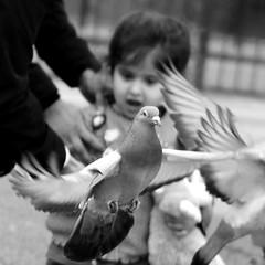 The Getaway (likrwy) Tags: street urban white black bird monochrome mono pigeon candid